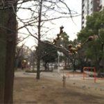 2017年桜川公園桜情報(20170313)