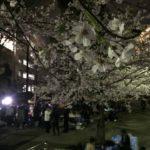 桜川公園の夜桜(20170406)