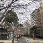桜川公園の桜咲き始め(20190322)
